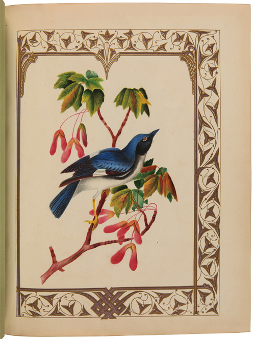 [ALBUM OF FIFTEEN WATERCOLORS OF PLANTS, FLOWERS, FRUIT, AND A BIRD]. Botanical Watercolors.