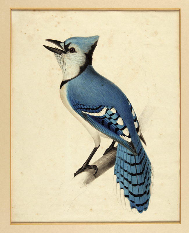 [FOUR ORIGINAL ORNITHOLOGICAL WATERCOLOR AND PENCIL DRAWINGS BY 19th-CENTURY BOTANICAL AND ZOOLOGICAL ARTIST ISAAC SPRAGUE]. Isaac Sprague.