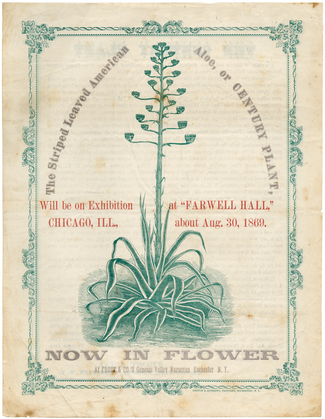 "THE STRIPED LEAVED AMERICAN ALOE, OR CENTURY PLANT, WILL BE ON EXHIBITION AT ""FAREWELL HALL,"" CHICAGO, ILL., ABOUT AUG. 30, 1869. NOW IN FLOWER. Genesee Valley Nurseries."