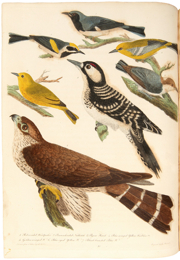 AMERICAN ORNITHOLOGY, OR, THE NATURAL HISTORY OF THE BIRDS OF THE UNITED STATES: ILLUSTRATED WITH PLATES; ENGRAVED AND COLORED FROM ORIGINAL DRAWINGS TAKEN FROM NATURE. Alexander Wilson.