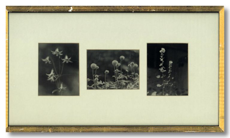 [Three Original Prints of Still Life Photographs of Flowers]. Paul L. Anderson, photographer.
