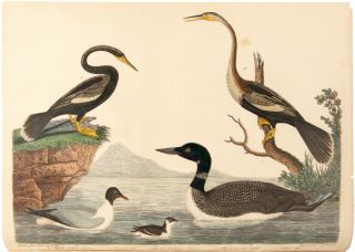 AMERICAN ORNITHOLOGY, OR, THE NATURAL HISTORY OF THE BIRDS OF THE UNITED STATES: ILLUSTRATED WITH PLATES; ENGRAVED AND COLORED FROM ORIGINAL DRAWINGS TAKEN FROM NATURE....