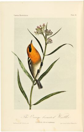 ILLUSTRATIONS OF THE BIRDS OF CALIFORNIA, TEXAS, OREGON, BRITISH AND RUSSIAN AMERICA. INTENDED TO CONTAIN DESCRIPTIONS AND FIGURES OF ALL NORTH AMERICAN BIRDS NOT GIVEN BY FORMER AMERICAN AUTHORS, AND A GENERAL SYNOPSIS OF NORTH AMERICAN ORNITHOLOGY.