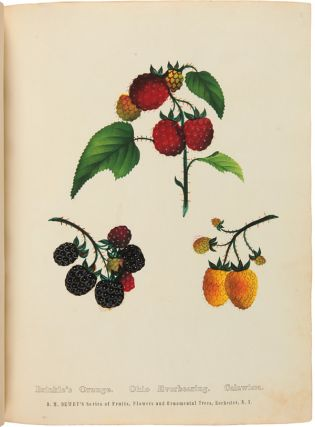 THE SPECIMEN BOOK OF FRUITS, FLOWERS AND ORNAMENTAL TREES. CAREFULLY DRAWN AND COLORED FROM NATURE, FOR THE USE OF THE NURSERYMAN.